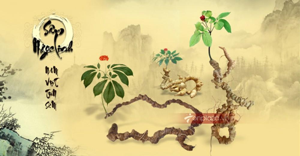 Thành phần chính của sâm Ngọc Linh  thiên nhiên