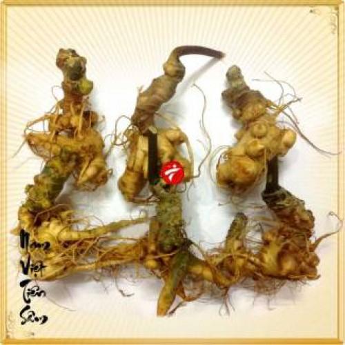 Sâm Ngọc Linh trồng 20 củ 1 cân NS342