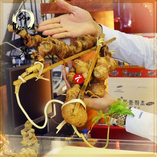 Củ nhân sâm Ngọc Linh 100% tự nhiên  loại 1.13kg 1 củ tươi